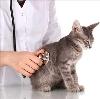 Ветеринарные клиники в Нехаевском